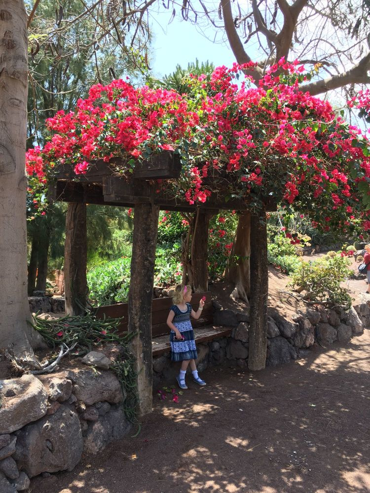 Is Fuerteventura a family friendly holiday destination - oasis park cactus