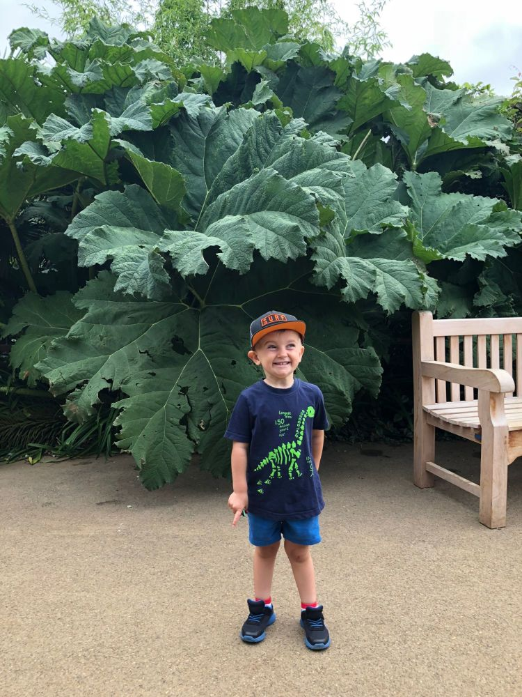 August 2018 Monthly Family Roundup - cotswold wildlife park giant leaves