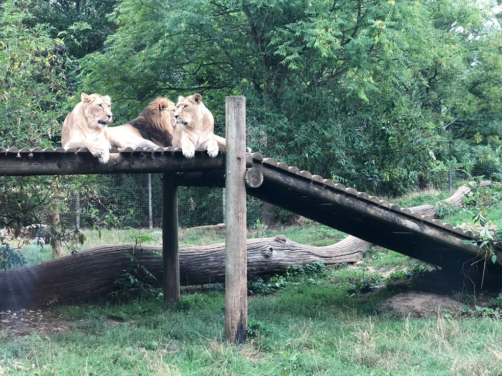 My very honest review of Cotswold Wildlife Park 1