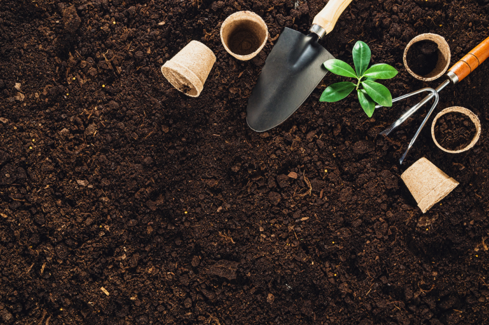 How to start gardening on a budget (2)