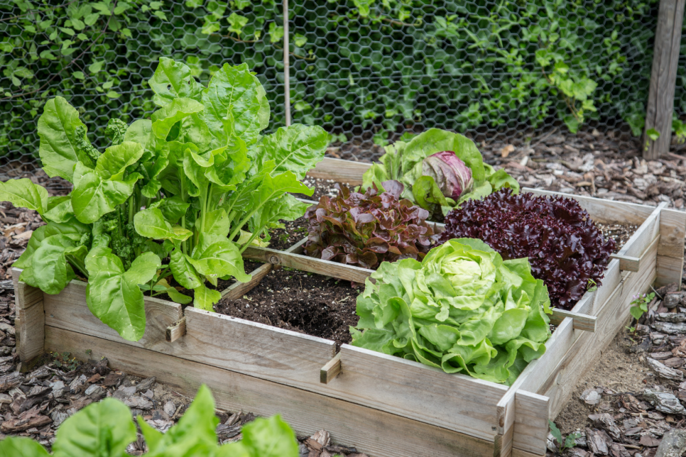 How to start gardening on a budget