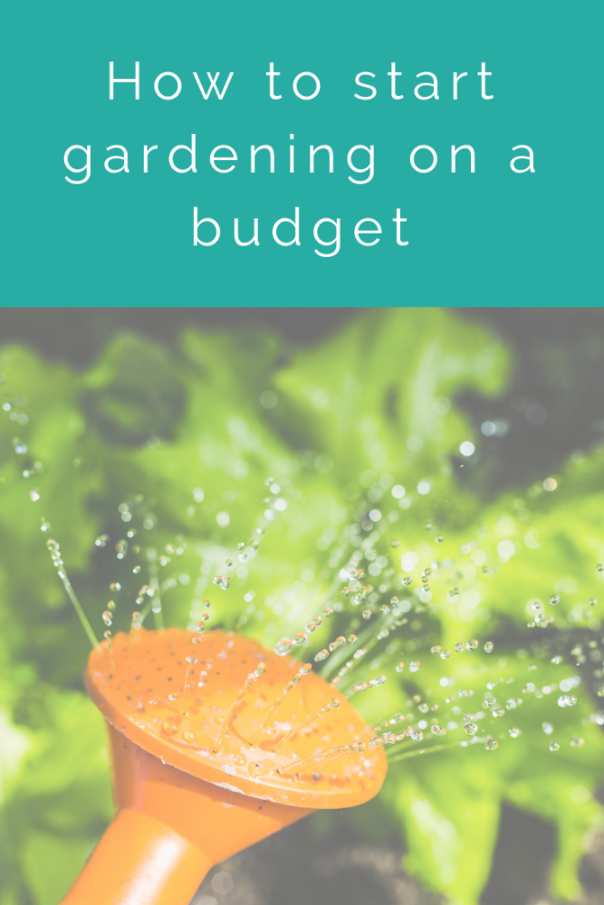 How to start gardening on a budget (1)