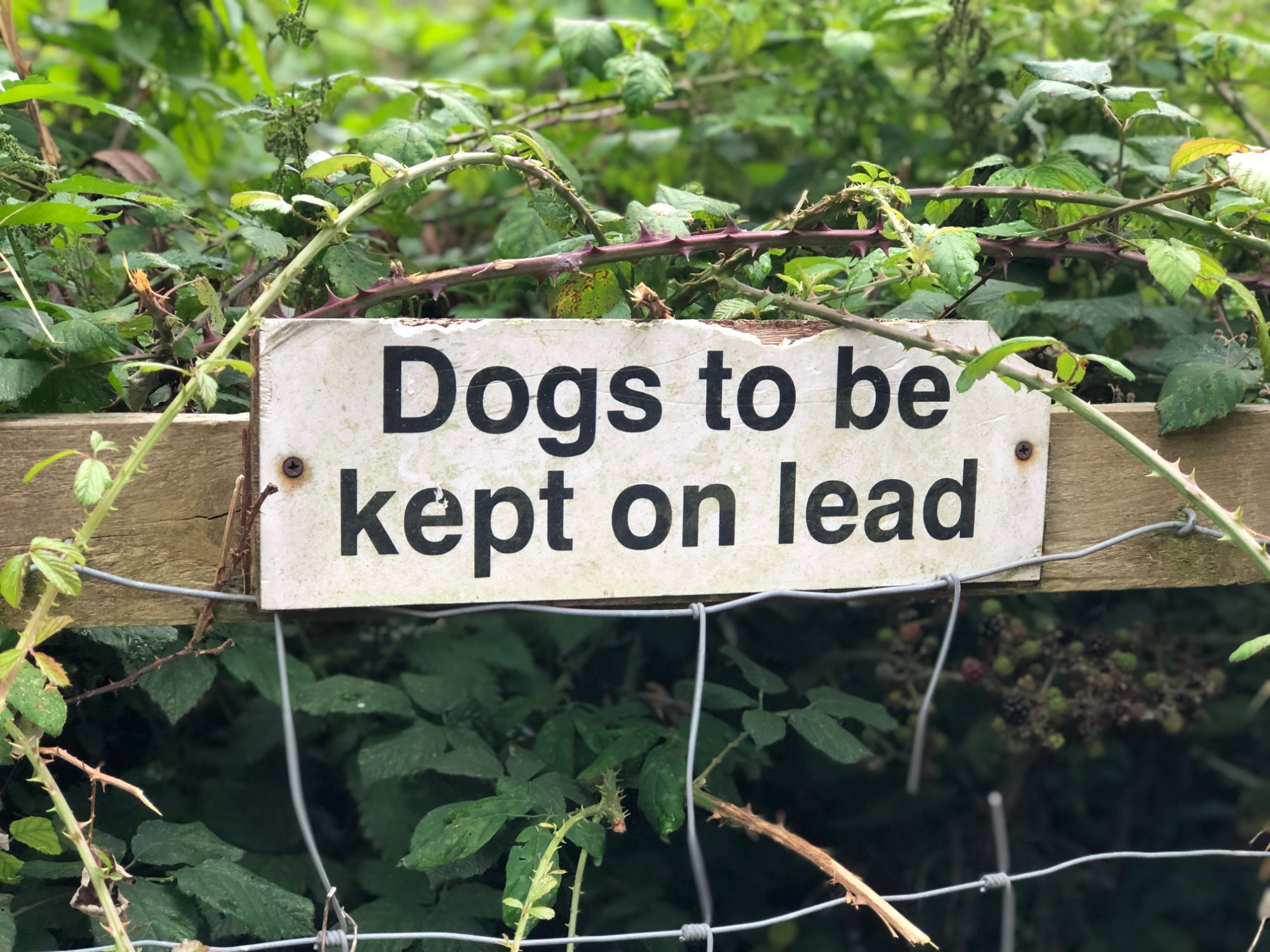 free stock image photo dogs to be kept on lead