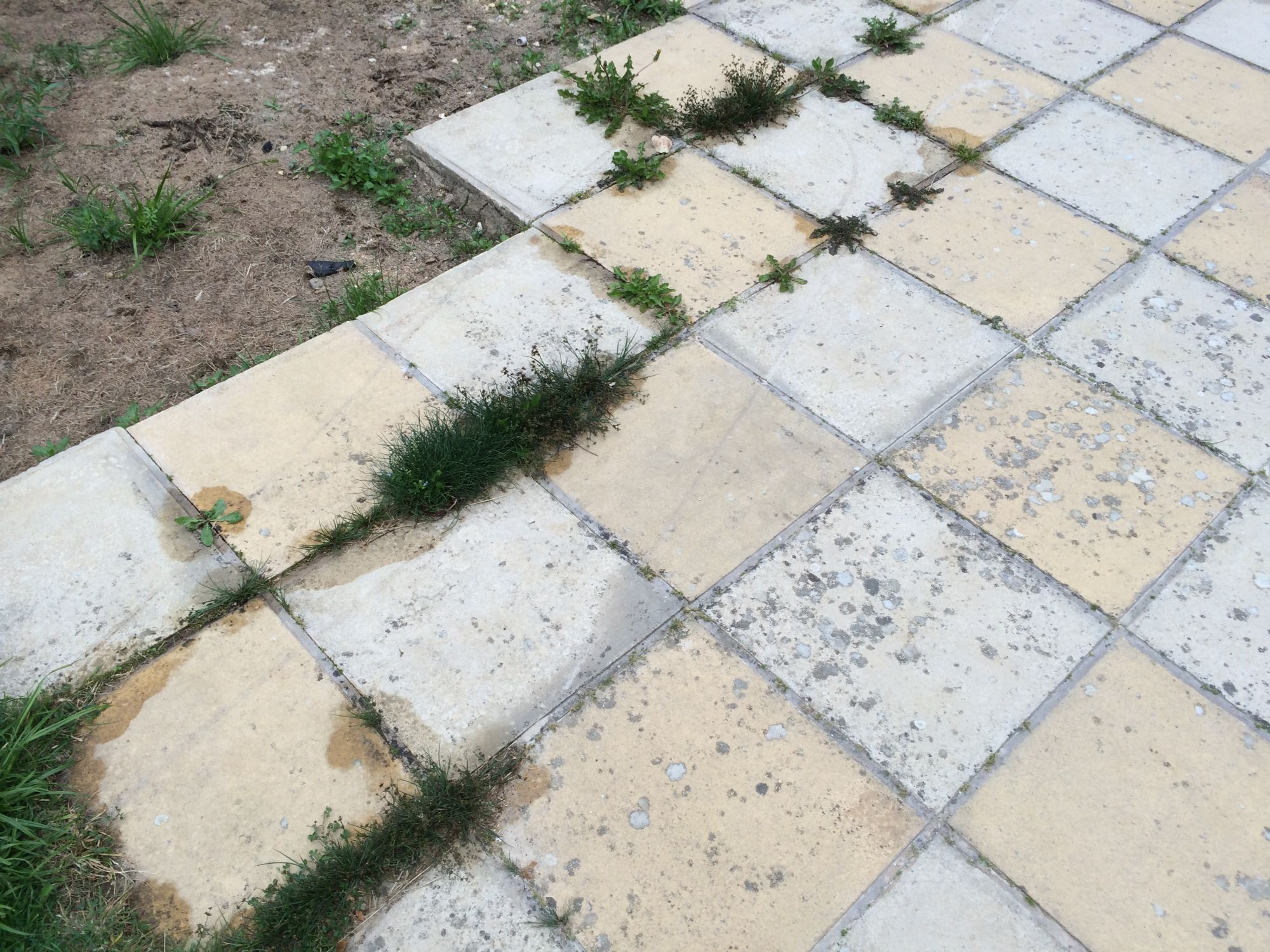 free stock image photo patio garden needs updating