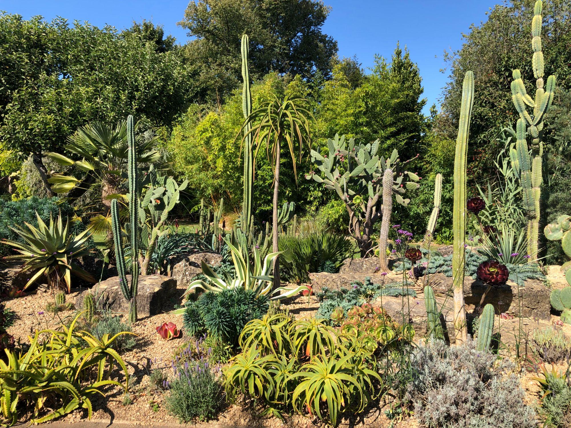 free stock image photo cactus garden