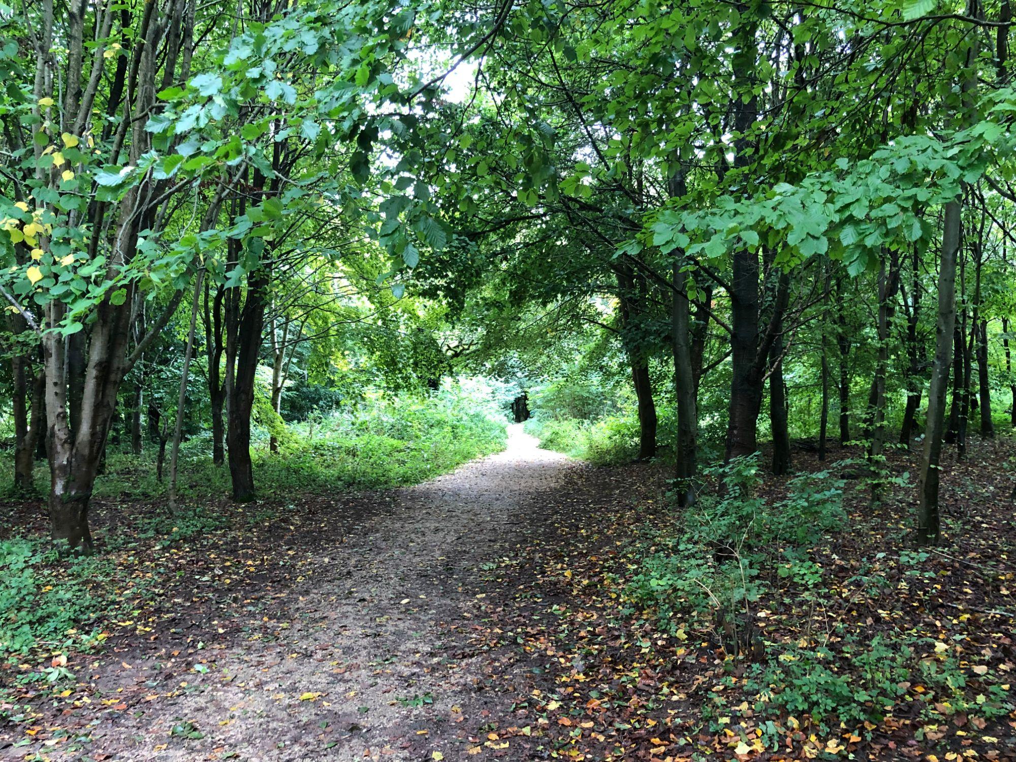 free stock image photo woodland walk trees path