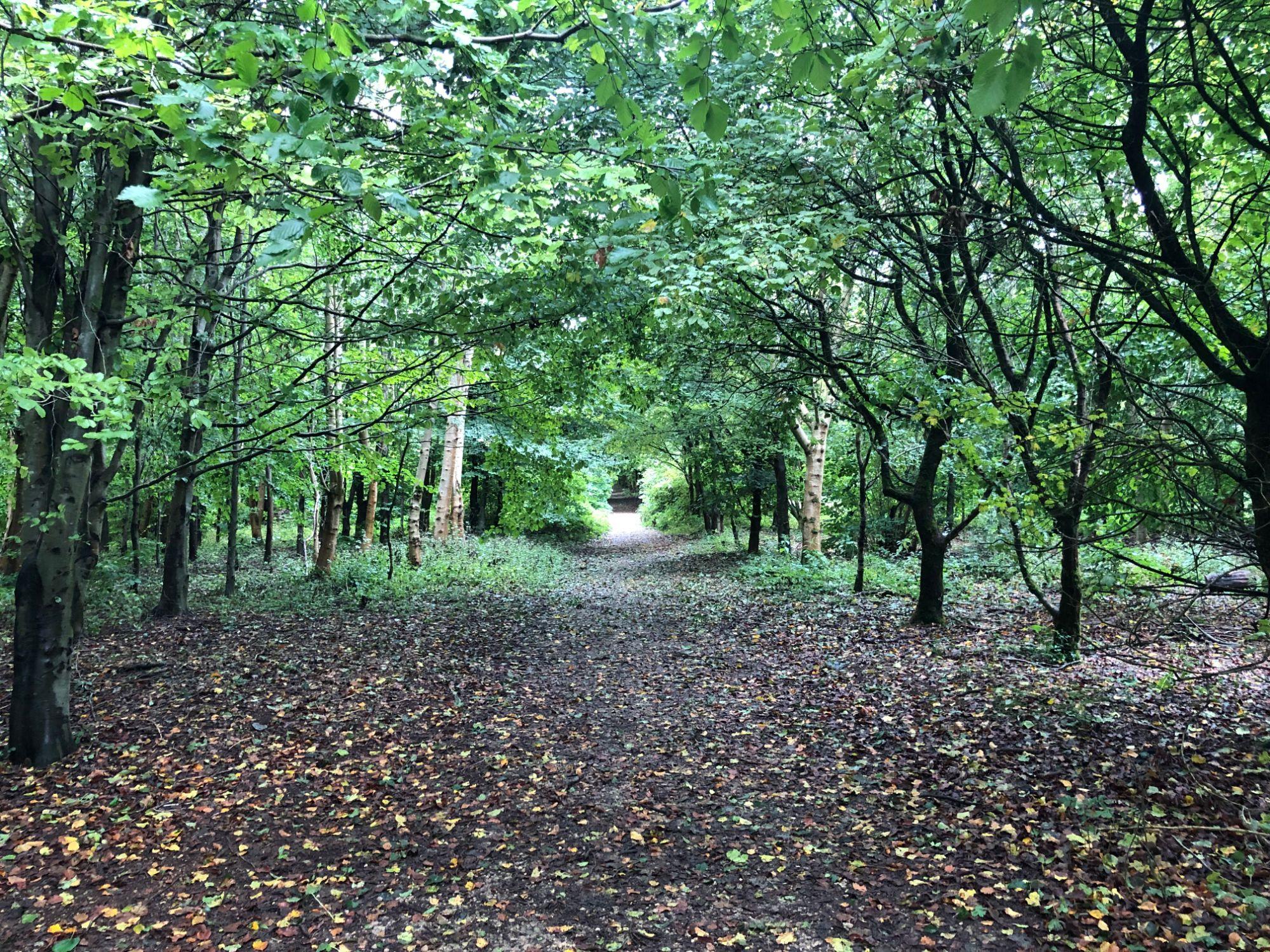 free stock image photo woodland walk nature trail path
