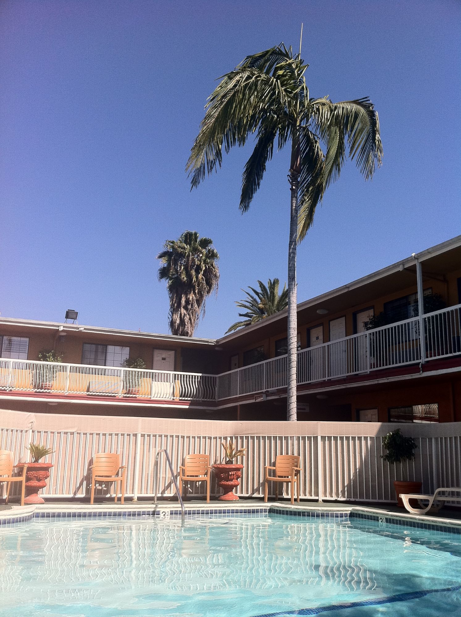 Free stock photo California Motel Swimming Pool Palm Trees Blue Sky