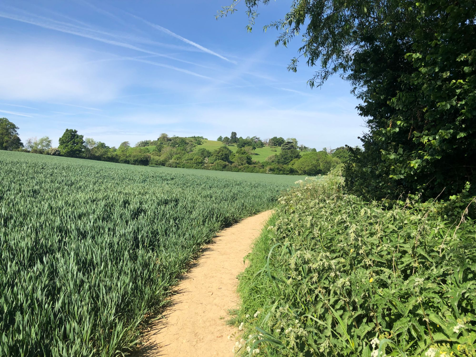 Free stock photo British farmers field crops agriculture sunbeam peaceful nature country public footpath