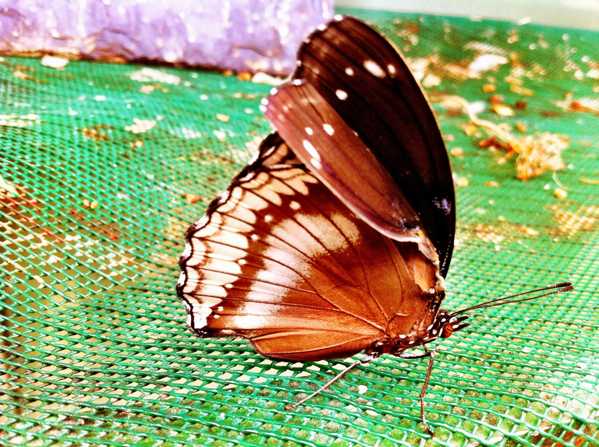 Free stock photo butterfly