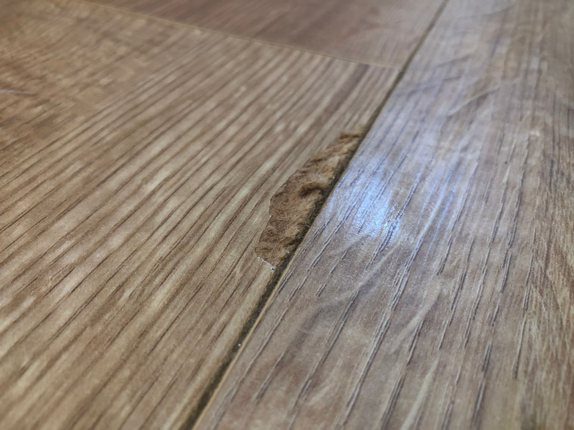 Free stock photo water damaged laminate floor