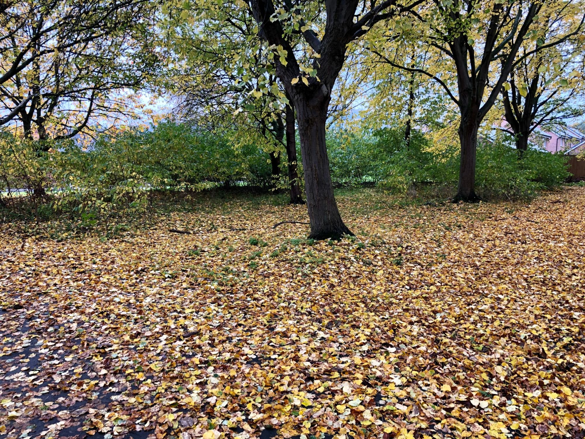 Free stock photo tree changing leaves colours autumn falling fallen