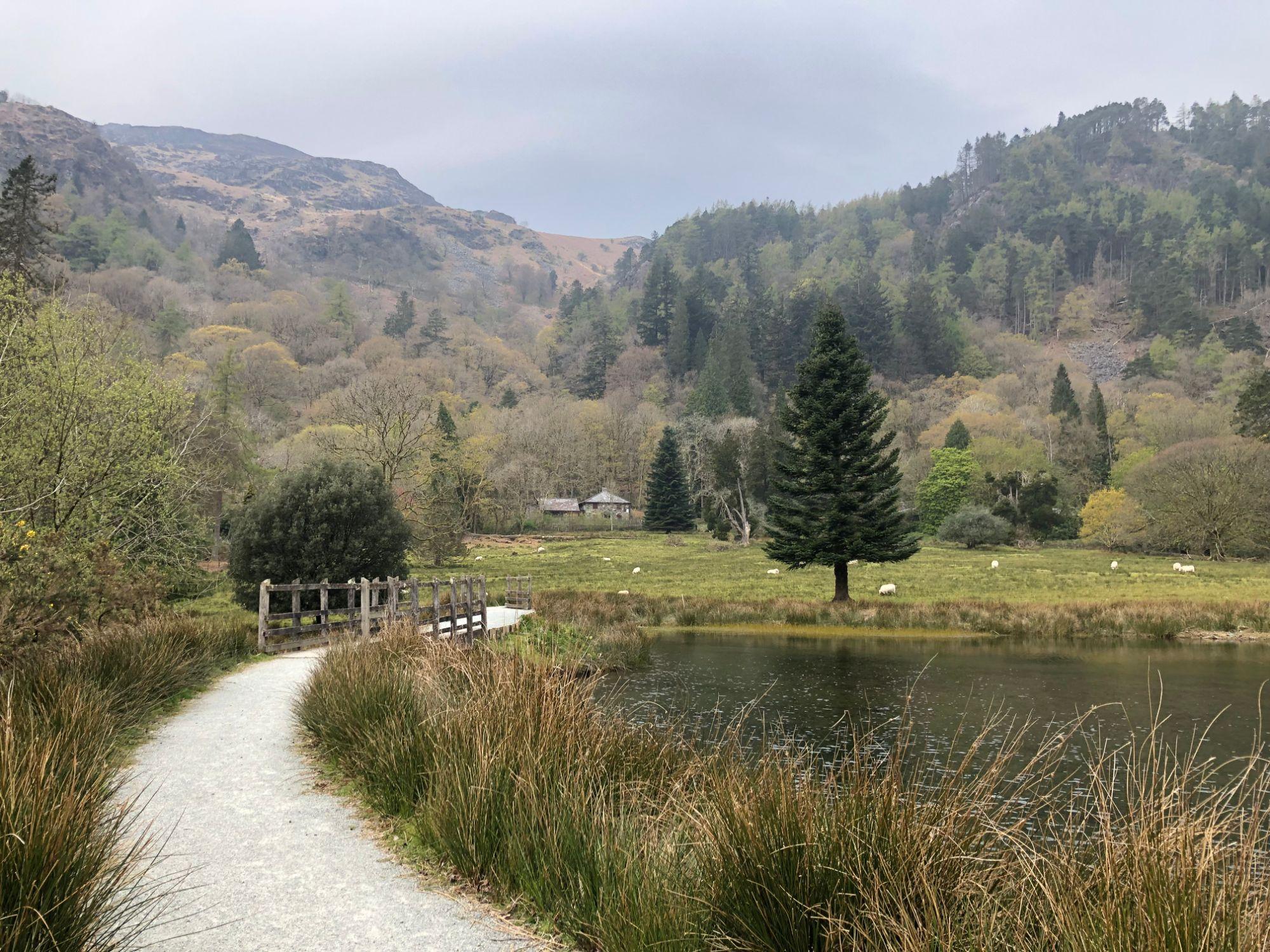 Free stock photo lake mountains trees forest Snowdonia