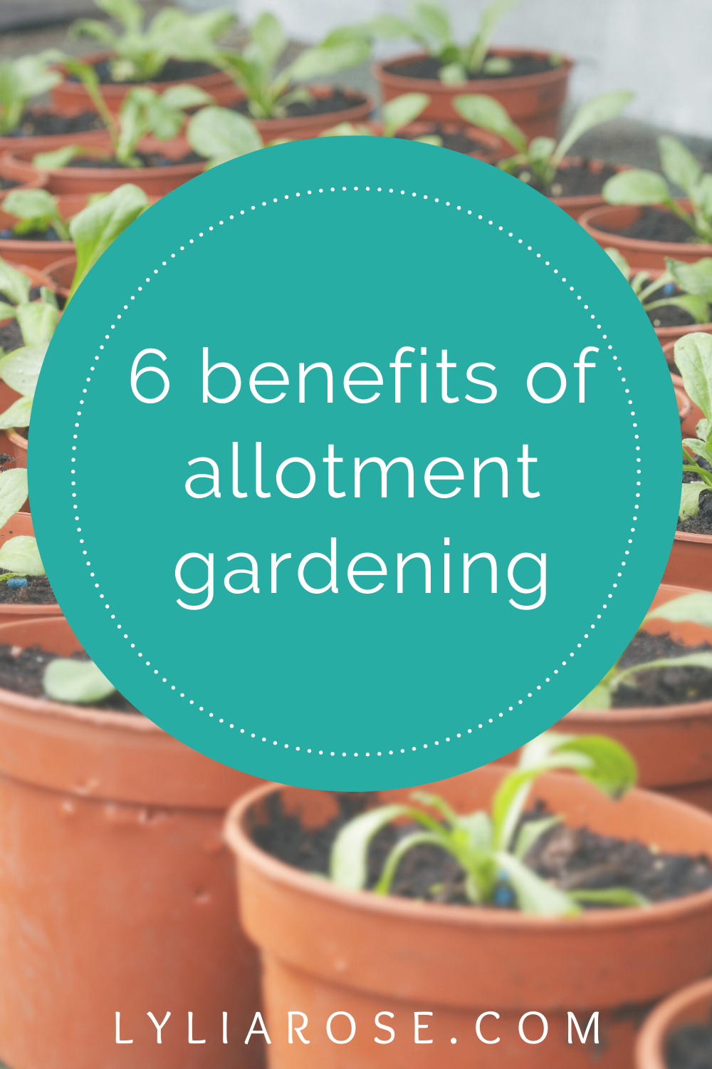 6 benefits of allotment gardening (2)