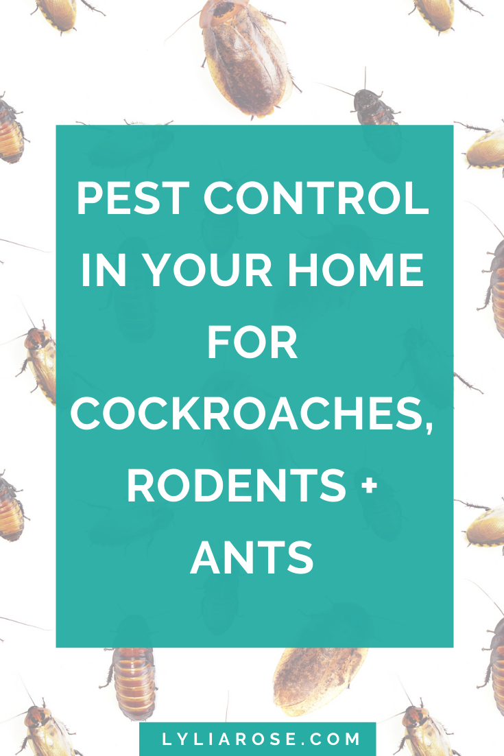 Pest control in your home for cockroaches, rodents + ants
