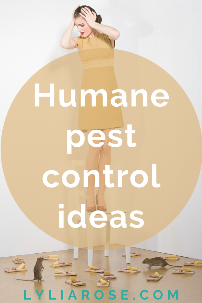 Humane pest control ideas