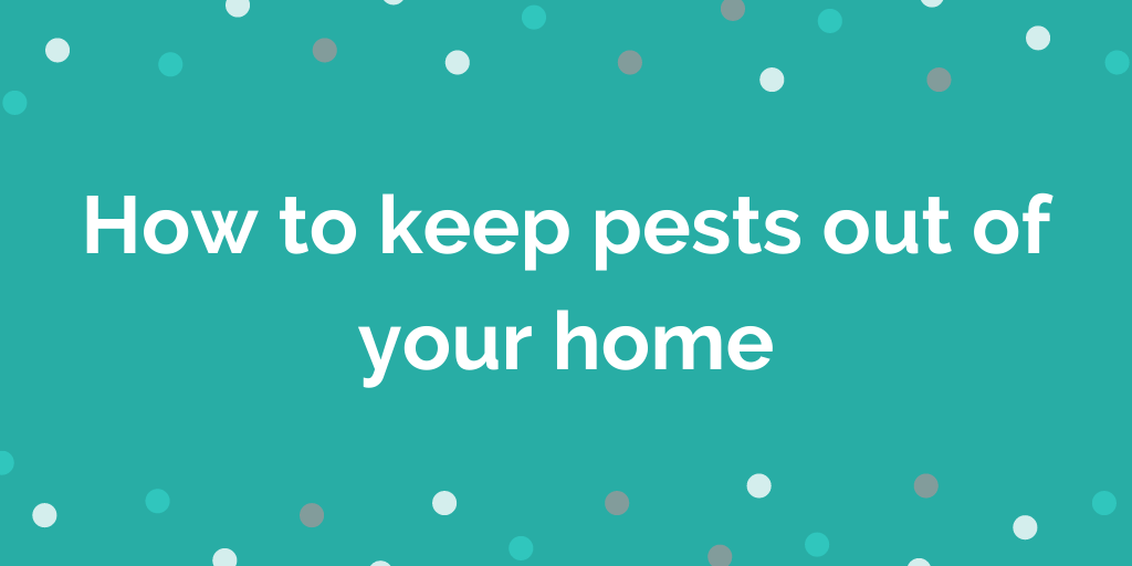 How to keep pests out of your home