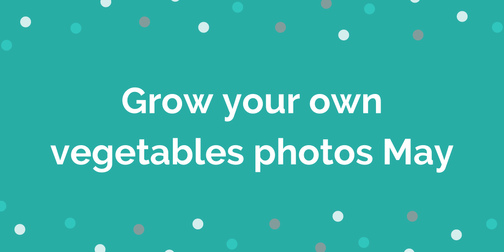 Grow your own vegetables photos May