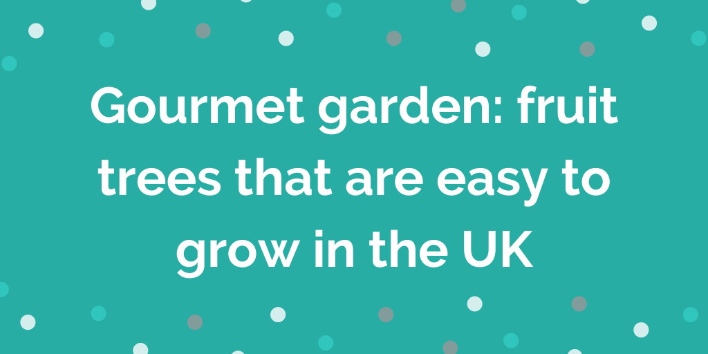 Gourmet garden fruit trees that are easy to grow in the UK