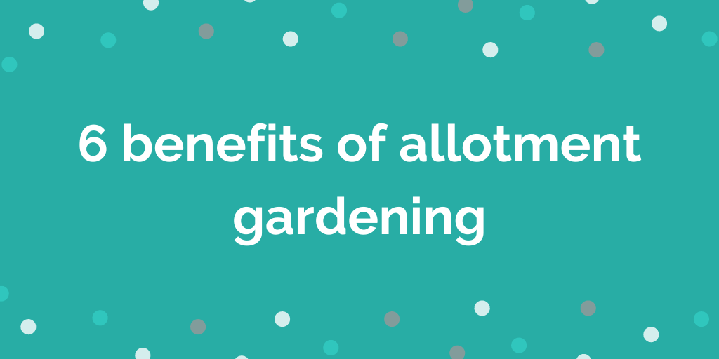 6 benefits of allotment gardening