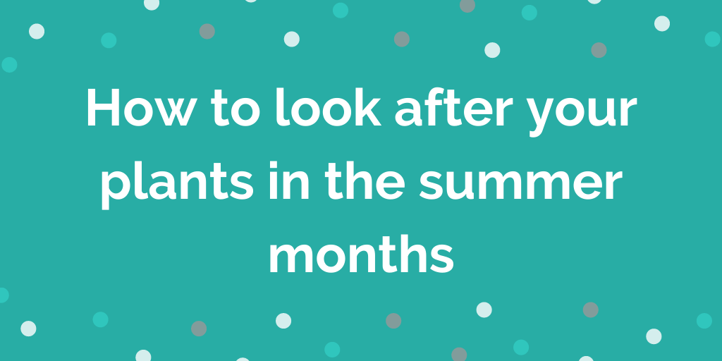How to look after your plants in the summer months