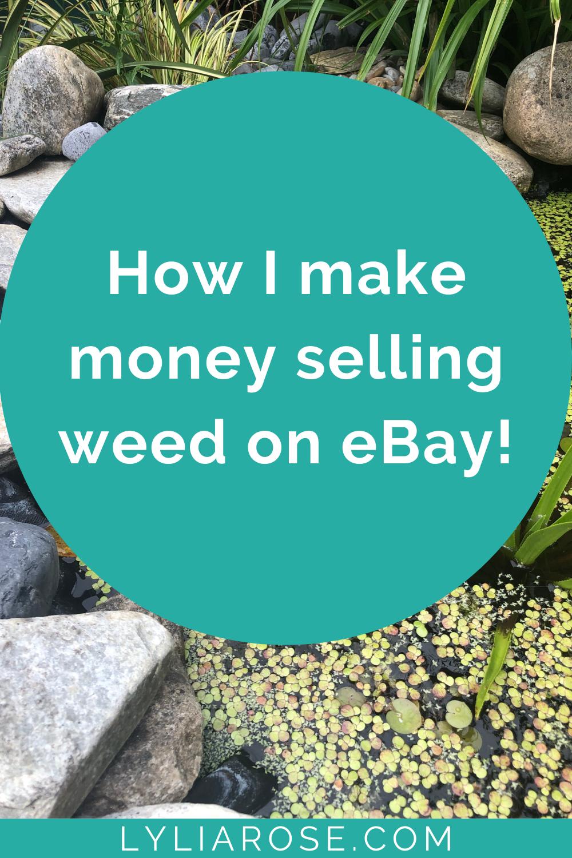 How I make money selling weed on eBay!