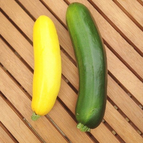 Free stock photo grow your own courgettes GYO