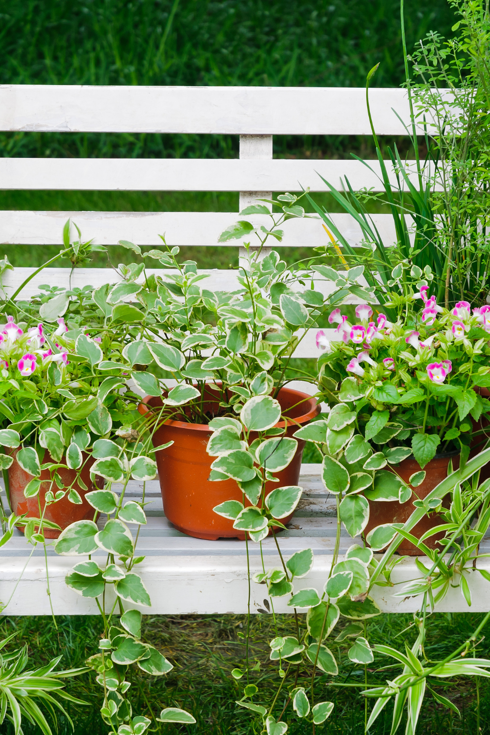 Tips to keep your plants happy in the warmer seasons