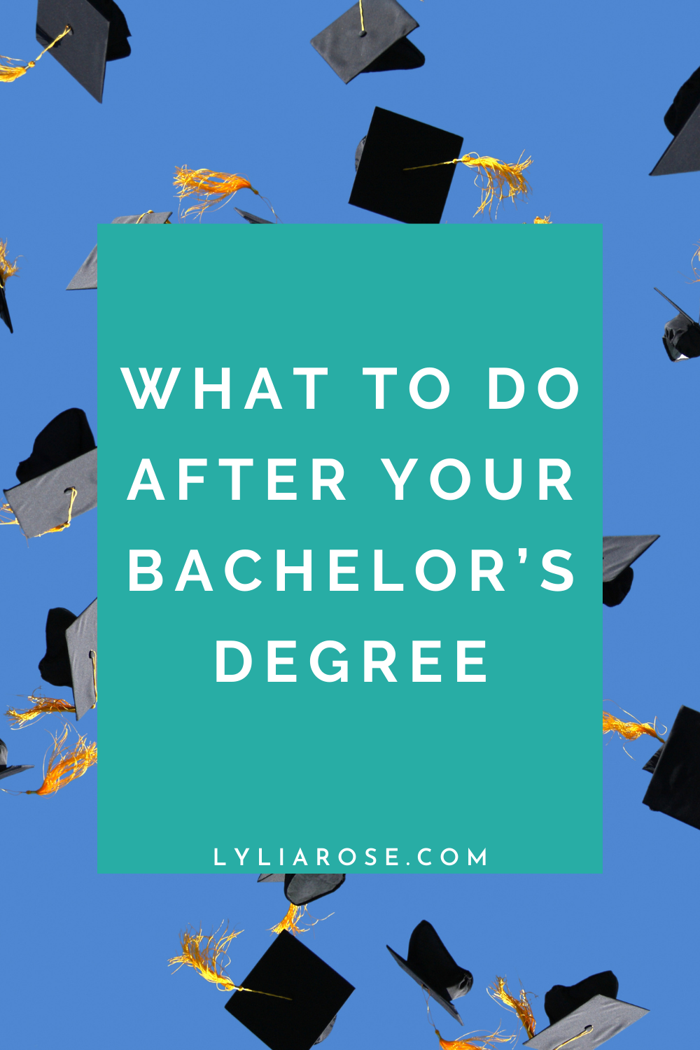 What to do after your bachelor's degree