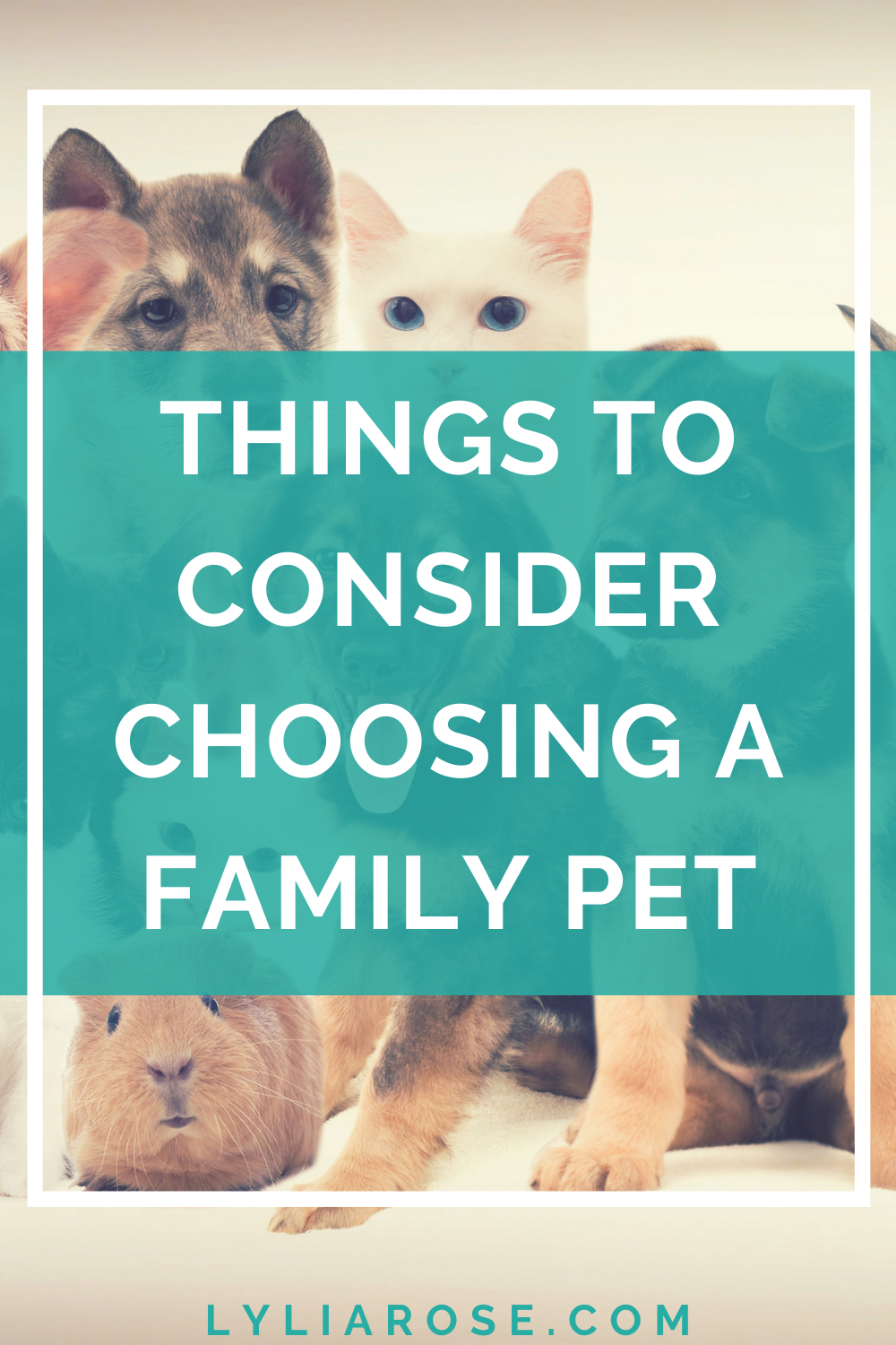 Important things to consider when choosing a pet for your family