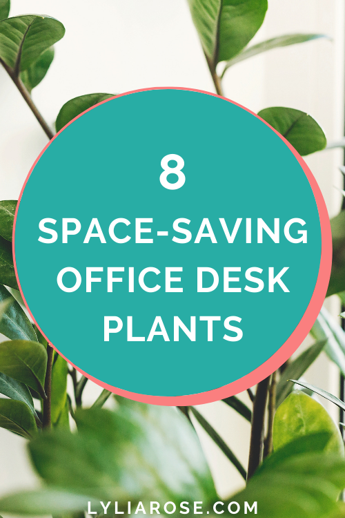 Discover the 8 best office desk plants that dont need space