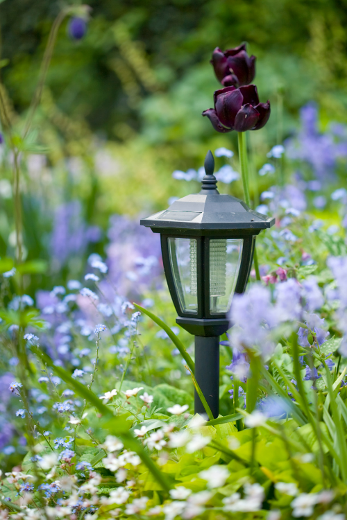 How to improve your garden on a budget