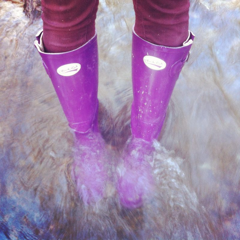 Purple Gloss Rockfish Wellington Wellies Blog Review