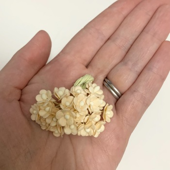 Mulberry Paper Flower Miniature Sweetheart Blossom Deep Ivory