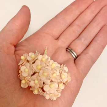 Mulberry Paper Flower Miniature Sweetheart Blossom Pale Peach