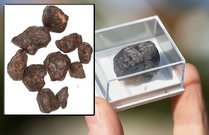 NWA 869 Meteorite Sample