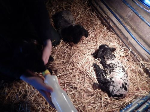 triplets under heatlamp feb 16