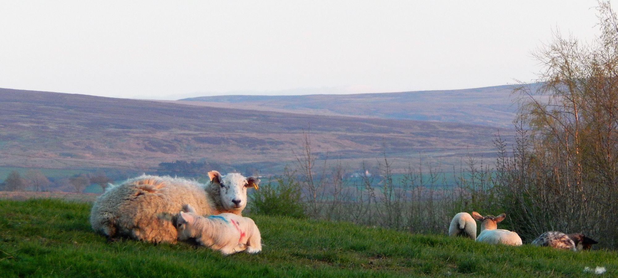view from Thornbrook Barn towards Burnmoor