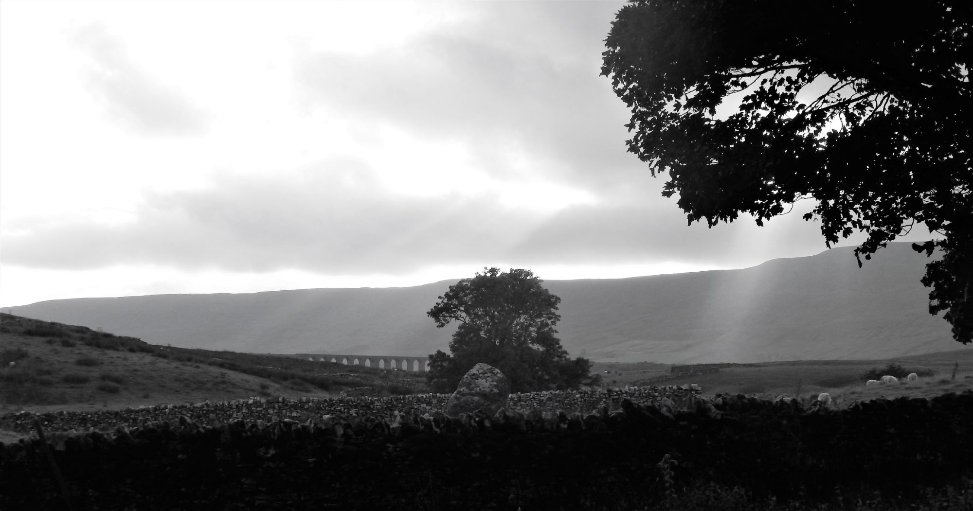 Ribblehead Viaduct from the unhinabited hamlet of Thorns