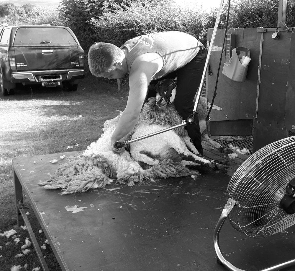 Dec shearing