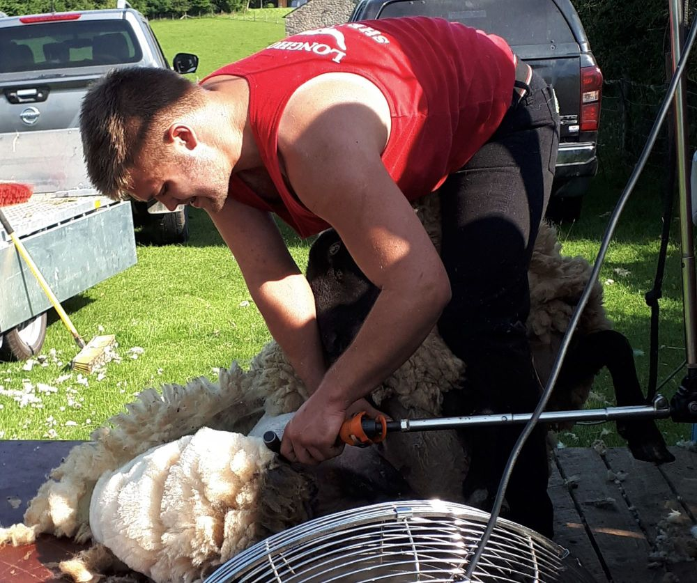 Dec shearing 2022
