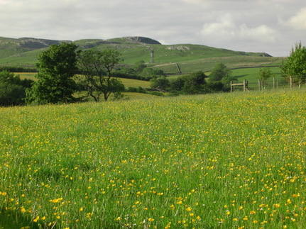 Across the meadow and looking toward Kingsdale