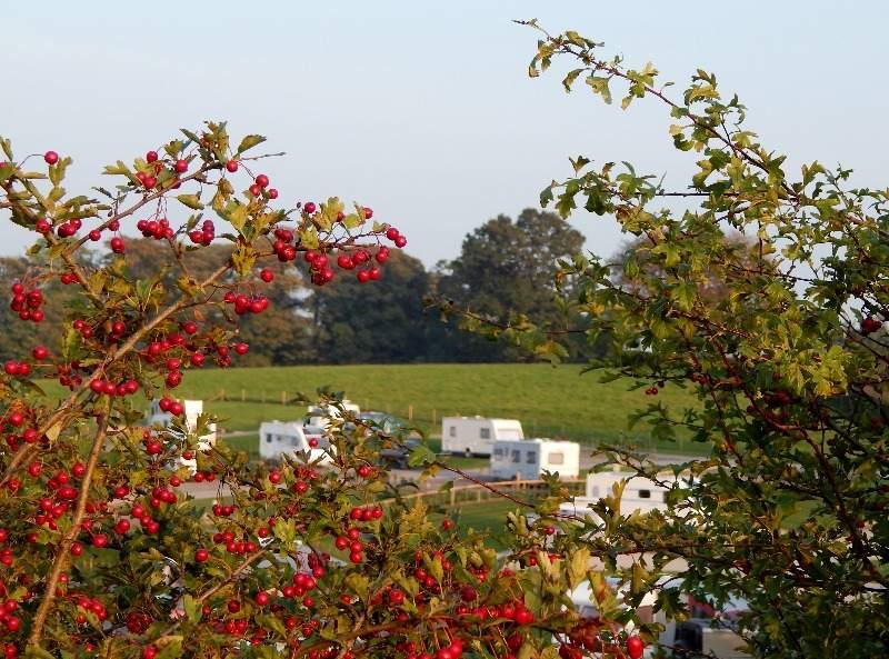 Berries & Caravans at Thornbrook Barn