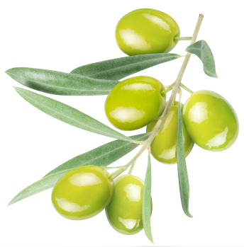 Olives - the oil is one of many natural ingredients