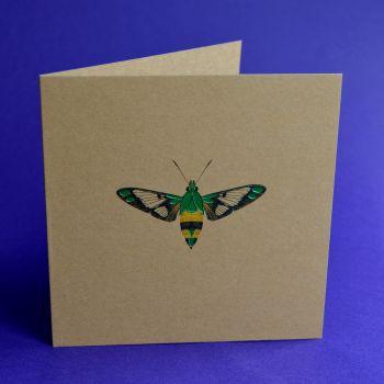 Moth I