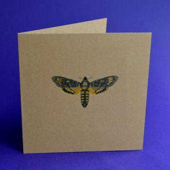 Moth II