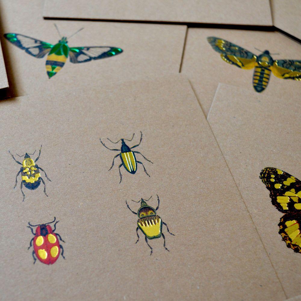 BEES | BUGS | BUTTERFLIES