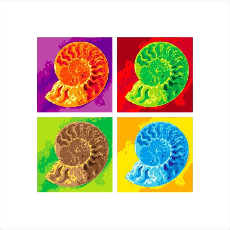 ammonite 5