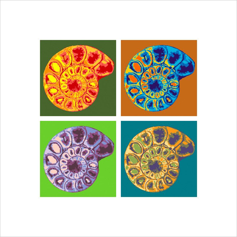 ammonite 6