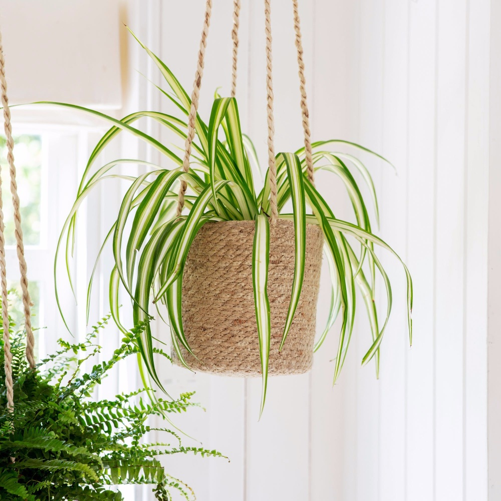 Jute Woven Hanging Indoor Plant Pot